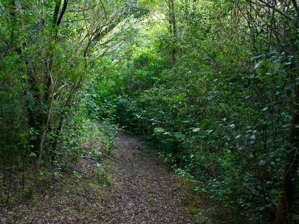 Our Own Forest Trail
